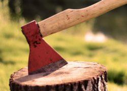 Благоустройство территорий - Вырубка деревьев и корчевания пней в Киеве и Киевской области - 4